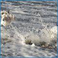 Kupanije zimoj