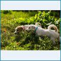 Сами щенки