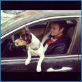 Обожает кататься с нами на машине