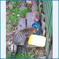 Кошка и ёж