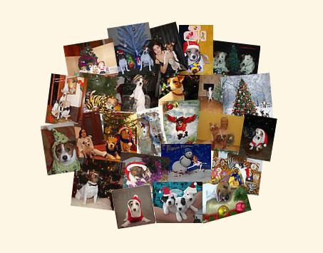 Переход на страницу Конкурса Новогодней фотографии и рисунка 2010