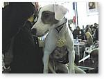 Лучший-щенок