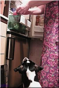 Куп и Холодильник