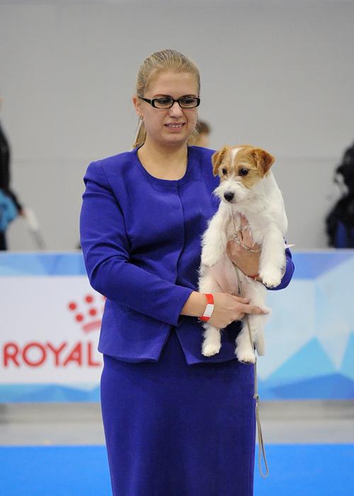 Лучший щенок - 1567
